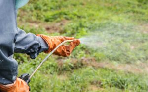 Roundup Risks May Go Beyond Cancer