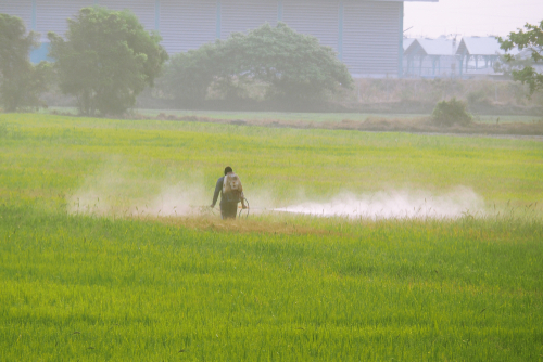 This is an image of a worker spraying a field and who has filed for a florida paraquat lawsuit