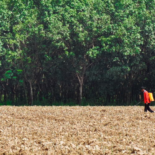 This is an image of a worker spraying a field with Paraquat.